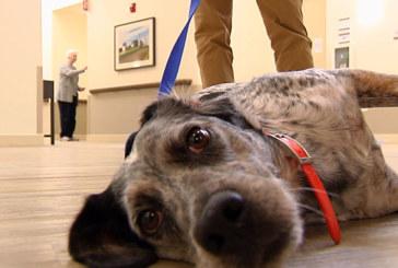 Shelter dog finds home helping Alzheimer's patients at Nashville center